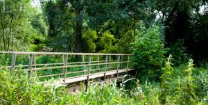 Barford-Road-Pocket-Park-3
